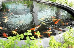 Koiteich bauen – Wasserwerte, Filter und optimale Tiefe